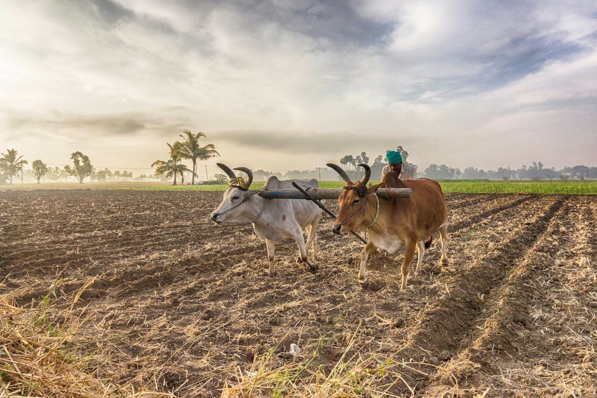 support global farmers category - HD2048×1365